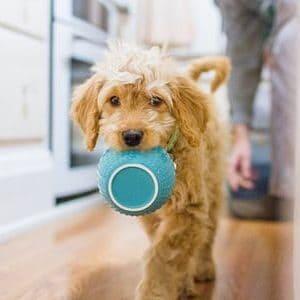 Alimentación para tratar la Caspa en los Perros