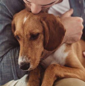 Cómo Cuidar de un Perro con Cáncer