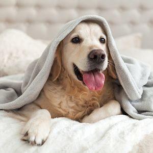 Prevenir el Cáncer en los Perros