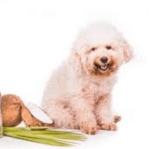 Remedios caseros para la seborrea en los perros