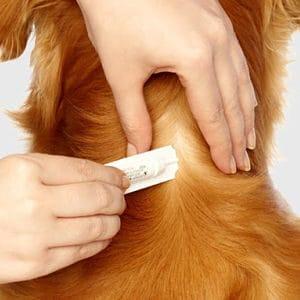 Tratamientos Tópicos para los Piojos en los Perros