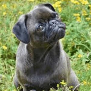 Tratamientos del síndrome vestibular en los perros
