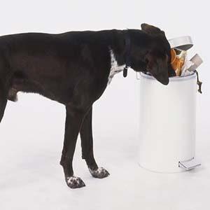 Causas de la gastritis en los perros