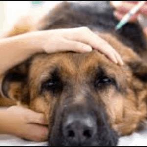 Diagnóstico del cáncer de piel en los perros