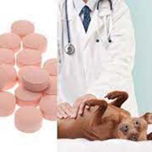Medicamentos para tratar la gastritis en los perros