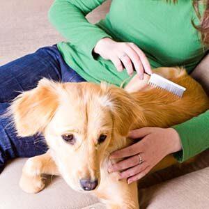 Cómo prevenir la caída de pelo en los perros
