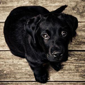 prevenir la caspa en los perros
