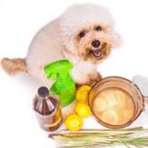 Remedios caseros para la coccidiosis en los perros