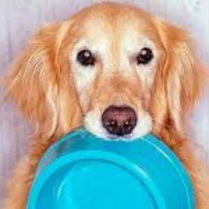 Alimentación para perros con artritis