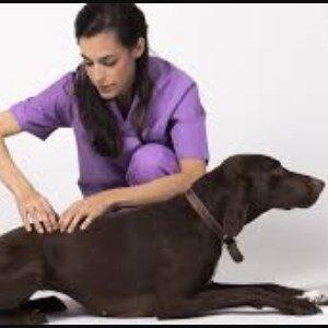 prevenir la artritis en los perros