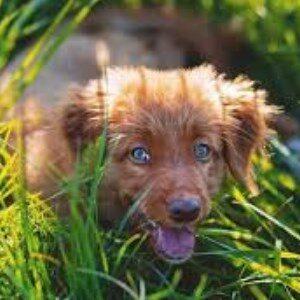 Remedios caseros para la artritis en los perros