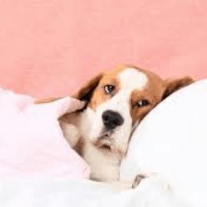síntomas de la artritis en los perros