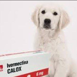 analgésicos para la artritis en los perros