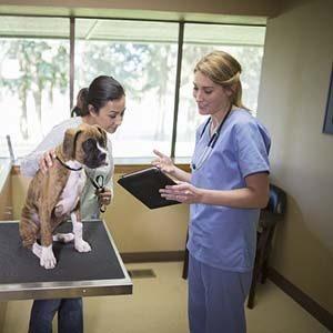 Antibióticos para tratar la pioderma en perros