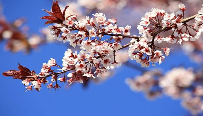 datos curiosos de la primavera