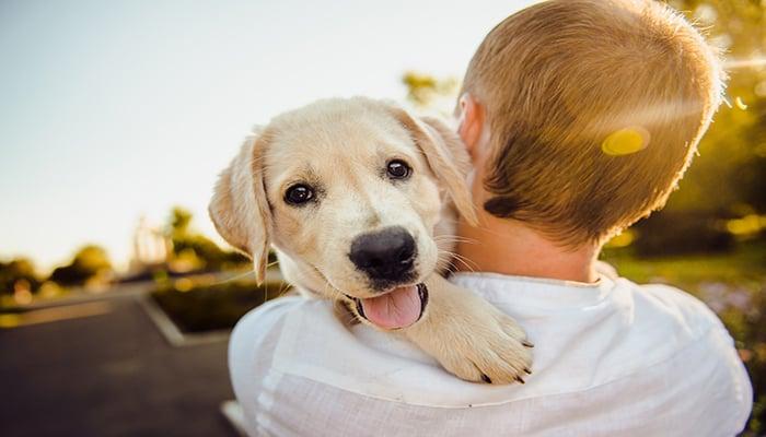 datos curiosos de los perros