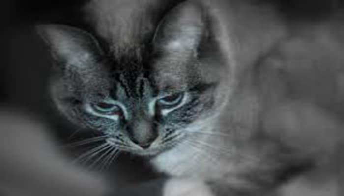 datos curiosos de los gatos
